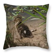 Duckling Lost Throw Pillow