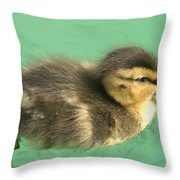 Duckling Close Up Throw Pillow