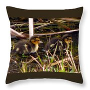 Ducklings 2 Throw Pillow
