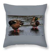 Ducks Hoping For Snacks  Throw Pillow