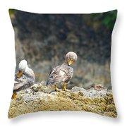 Ducks On A Rock Throw Pillow
