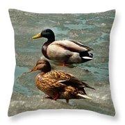 Ducks On Ice Throw Pillow