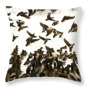 Ducks On The Move Throw Pillow