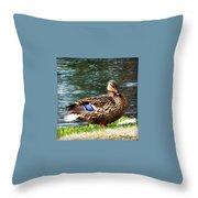 Ducky Day  Throw Pillow