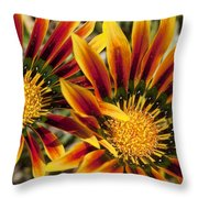 Dueling Gerberas Throw Pillow
