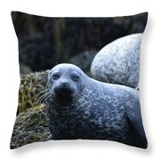 Dunvegan Loch With A Group Of Harbor Seals Throw Pillow
