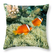 Dusky Clownfish Throw Pillow