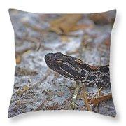 Dusky Pygmy Rattlesnake Throw Pillow