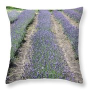 Dutch Lavender Field Throw Pillow