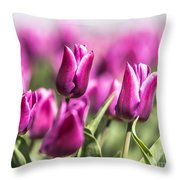 Dutch Tulips 2016 - Part One Throw Pillow
