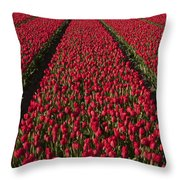 Dutch Tulips Second Shoot Of 2015 Part 1 Throw Pillow