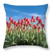 Dutch Tulips Second Shoot Of 2015 Part 10 Throw Pillow