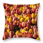 Dutch Tulips Second Shoot Of 2015 Part 9 Throw Pillow