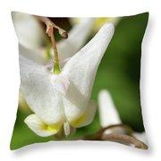 Dutchman's Breech Throw Pillow