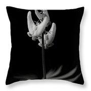 Dutchman's Breeches Black And White Throw Pillow