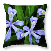 Dwarf Crested Iris Throw Pillow