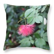 Dwarf Powder Puff Flower Throw Pillow