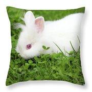 Dwarf White Bunny Spring Scene Throw Pillow