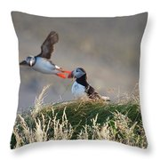 Dyrholaey Puffins Throw Pillow