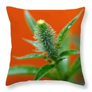 Eager For Orange Throw Pillow