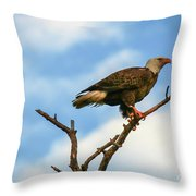 Eagle And Blue Sky Throw Pillow