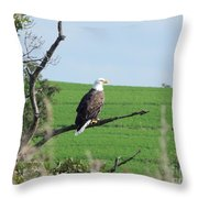 Bald Eagle Overlook Throw Pillow