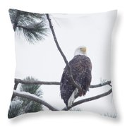 Eagle In A Pine Tree Throw Pillow
