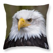 Eagle In Ketchikan Alaska Throw Pillow