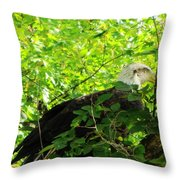 Eagle In The Tree Throw Pillow