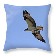 Eagle Lakes Park - Osprey In Flight With Sea Fish Meal Throw Pillow