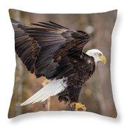 Eagle Landing On Perch Throw Pillow