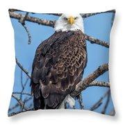 Eagle Mean Muggin Me Throw Pillow