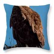 Eagle Of The Salt River Throw Pillow