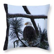 Eagle On A Frosted Limb Throw Pillow