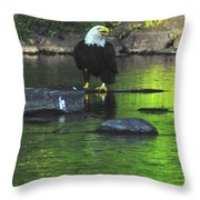 Eagle On River Rock IIi Throw Pillow