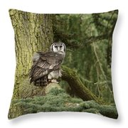 Eagle Owl In Forest Throw Pillow