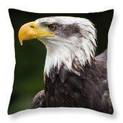 Eagle Portrait Throw Pillow