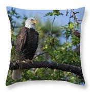 Eagle Series 13 Throw Pillow
