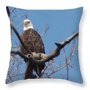 Eagle Watching Throw Pillow