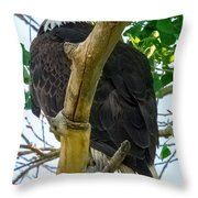 Eagles Of The Salt River Throw Pillow