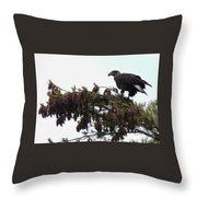 Eaglet In Pines Throw Pillow