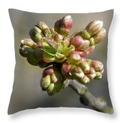Early Cherry Blossom Throw Pillow