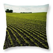 Early Growth Soybean Field Throw Pillow