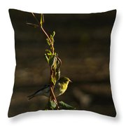 Early Morning For American Golden Finch Throw Pillow