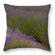 Early Morning Lavender Throw Pillow