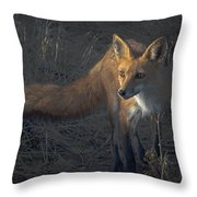 Early Morning Red Fox Prowl Throw Pillow