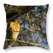 Early Morning Still Hunting  Coopers Hawk Art Throw Pillow