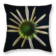 Early Stage Of Cone Flower Bloom Throw Pillow