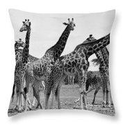 East Africa: Giraffe Throw Pillow