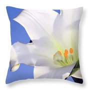 Easter Lily Back Lit By The Sun  Throw Pillow